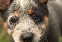 Gorgeous pups