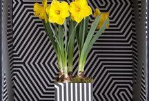 Kamerplanten die de lente in huis brengen