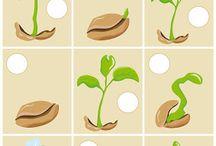 od semienka