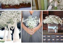 Wedding/Mariage