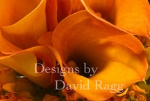Feeling Orange! / Designs by David Ragg - photography by Mike Nicholson