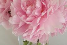 Flower decor / Flower decor