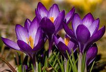 Flowers in my little garden