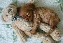 Pup / Cute
