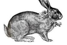 Rabbit & Hares