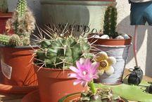 My cactus&succulents