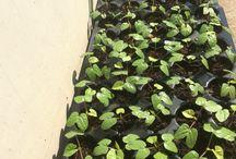Devendra Singh Rathore / Garden lover