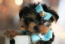 cute  / Cuteness overloaded.