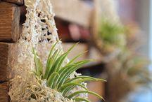 hanging basket air plants