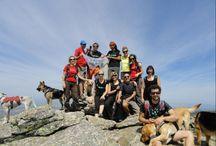 Socialitzar-se / Participació conjunta en activitats per persones i gossos