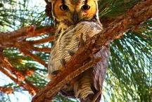 Love Owls / by Charlene Hornbaker Mulcahy