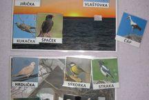 Ptaci
