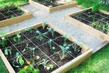 gardening and garden design / by Andrea Hawkins