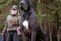Dogs: A Man's Best Friend
