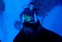 Croisière et Plongée : nos meilleurs spots dans le monde! / Combinez vacances à la voile et découverte privilégiée des plus beaux sites de plonge au monde