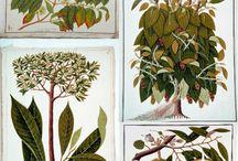 encyclopaedic drawings and prints of nature