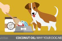 Coconut for dogs.