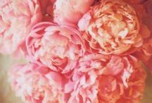 Flowers / by Alyssa Milovich