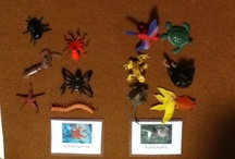 Vertebras and invertebras