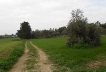 Code No.6984 A land for sale in the village Kolossi in Limassol. / Code No.6984 A land for sale in the village Kolossi in Limassol.  The land has an area of +/-500m², with 90% build factor. It has distance from the town of Limassol 7 km or 7 minutes. Has full share of title deeds.   Code Νο:6984 Selling price: €85.000