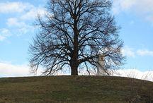 Trees / Stromy