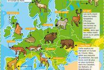 Animaux européens