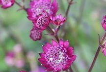 Long-Blooming Perennials
