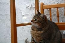 Gato(s)