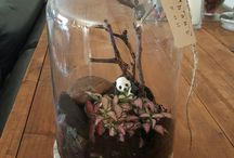 making terrariums with passion