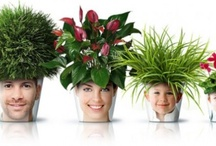 Tropical / Indoor Plant Ideas