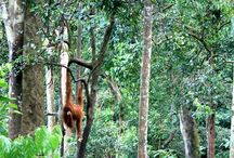 Exploring Indonesia's national parks: Sumatra (Part 1) / From the already popular Mount Leuser National Park to Tesso Nilo National Park, which is the habitat of the Sumatran elephant, Sumatra offers many must-visit wildlife sanctuaries.