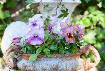 Pretty Pansies and Such / by Lisa Hewitt
