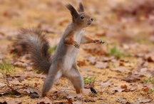 Squirrel-tastic / All things squirrels: Cute photos, pictures, and internet memes