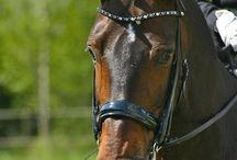 My idols / Horses and riders with JUDI products