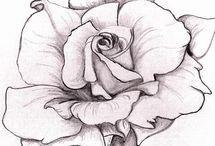 AA . Rose Drawings