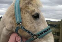 Joe stroller / My pony wanted me to add photos of him sooo...