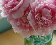 Pretty Flowers & Garden