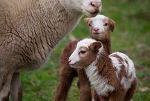 Farm life - the fantasy