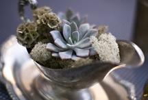 Indoor plantd