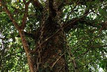 The Chain Tree - Lakkidi