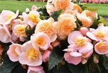 Nouveau au jardin d'ornement / Les nouvelles variétés de fleurs et associations à planter.