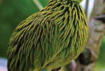 birdamazing