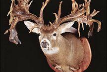 Deer / by Ringo