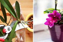 pokojove kvetiny