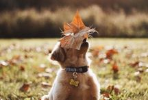 Наступила осень