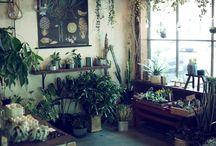 Green interior / 室内でのアレンジメント