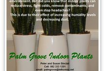 Indoor Plants / PALM GROVE NURSERY is a family owned and run business. We specialize in the installation and maintenance  of commercial indoor plants in planters, water features and small outdoor gardens.    Palm Grove Nursery has been servicing the  indoor and outdoor plant décor industry for the past 20 years and has many long-standing happy customers.