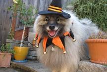Kobe Bear Halloween Costume 2012 / by Animal Muse: Cathy Currea