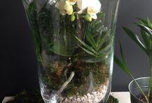 Qwiatki, kompozycje florystyczne