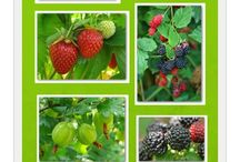 gardening berries and fruit